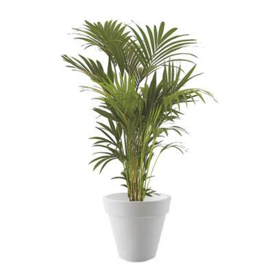 Option location de plante